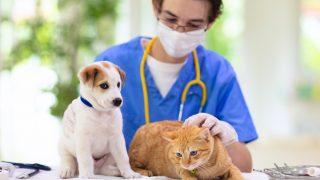 ペットの予防接種は絶対?義務と任意の違いについて