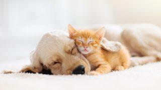 ペット初めて飼う時に必要な準備や気を付けておきたいこととは?